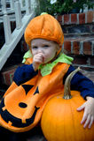 Baby Pumpkin Stock Photography