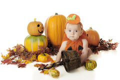 Baby Pumpkin Stock Photo