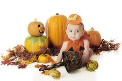 Baby Pumpkin stock photo