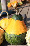 Baby pumpkin Royalty Free Stock Photo