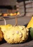Baby pumpkin Stock Photos