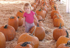 Baby in pumpkin patch Stock Photos