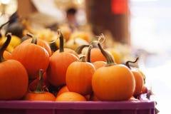 Baby pumpkins Stock Photography