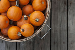 Baby pumpkins in a basket Stock Photography