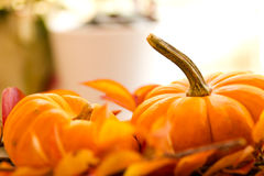Baby Pumpkins on a Bed of Fall Leaves Stock Photos