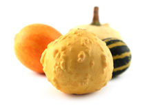 Baby pumpkins isolated Royalty Free Stock Images