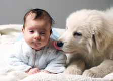 Baby and puppy. Baby and sheepdog puppy lain together on white blanket stock photos