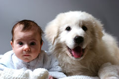 Baby and puppy. Baby and sheepdog puppy lain together on white blanket royalty free stock photography