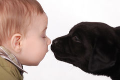 Baby and puppy. Baby and black puppy labrador retriever stock images