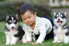 Baby and puppy. Chinese girl play with two puppies Stock Images