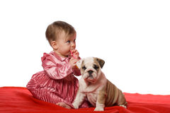 Baby and puppy. Of english bulldog isolated royalty free stock images