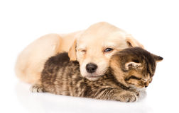 Baby puppy dog and little kitten sleeping together. isolated. On white royalty free stock photos