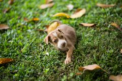 Baby Puppy Dogs Playing with angry royalty free stock photos