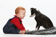 Baby and puppy. Baby girl playing with a puppy on white background stock image