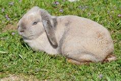 Baby rabbit stock image