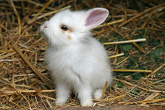 Baby rabbit. Close up of a sweet little baby rabbit royalty free stock photos