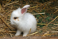 Baby rabbit. Close up of a sweet little baby rabbit stock photo