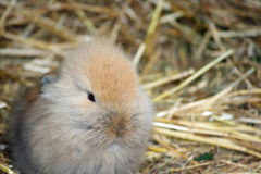 Baby rabbit. Close up of a sweet little baby rabbit royalty free stock photo