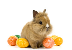 Baby rabbit. With easter eggs on white background Stock Image