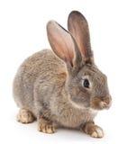 Baby rabbit. Stock Photography