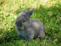 Baby rabbit Stock Images