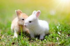 Baby rabbit eating grass outdoor on sunny summer day. Easter bunny in garden. Home pet for kid. Cute pets and animals for family