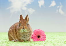 Baby rabbit with flower Royalty Free Stock Photography
