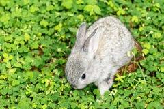 Baby rabbit go freedom stock image
