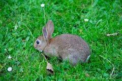 Baby rabbit in grass Stock Photo