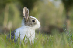 Baby rabbit in the grass Stock Photo