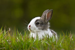 Baby rabbit in the grass Stock Image
