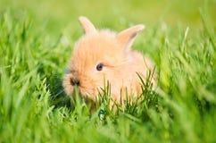 Baby rabbit in green grass Stock Photo