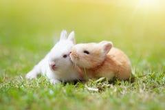 Baby rabbit outdoor. Easter bunny stock photo