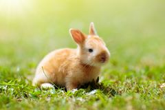 Baby rabbit outdoor. Easter bunny royalty free stock images