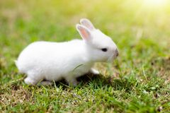 Baby rabbit outdoor. Easter bunny royalty free stock photo