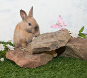 Cute Bunny and Butterfly. Stock Photos