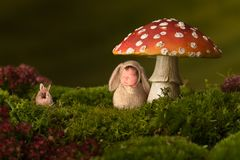 Baby rabbit sleeping in toadstool backdrop stock images