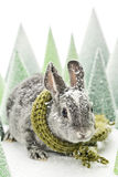 Baby rabbit with snow Royalty Free Stock Image