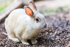 Baby rabbit in Summer day.  Stock Photography