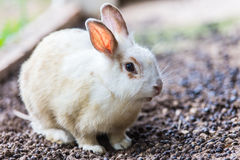 Baby rabbit in Summer day.  Royalty Free Stock Image