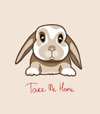 Baby rabbit, vector illustration Royalty Free Stock Photography