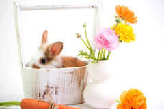 Baby rabbit in vintage basket and ranunculus flowers. Stock Photo