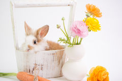 Baby rabbit in vintage basket and ranunculus flowers. Stock Image