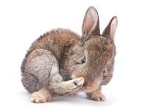 Baby rabbit on white Royalty Free Stock Image