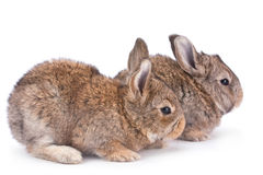 Baby rabbit on white Stock Photo