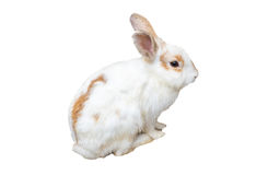 Baby rabbit white brown. Isolated on background Stock Photo