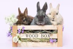 Baby rabbits Royalty Free Stock Photo