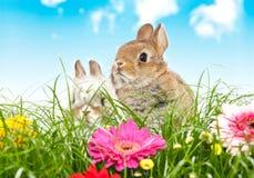 Baby rabbits Stock Photos