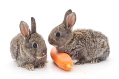 Baby rabbits with carrot. Stock Photography