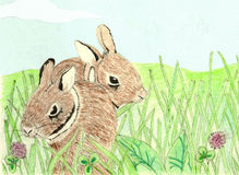 Baby Rabbits Colored Pencil Royalty Free Stock Photo